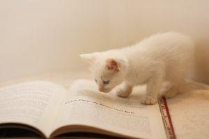 本と猫460986a8e08b0afcaa59a74b149215e7_s